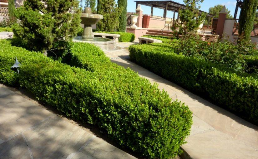 Am plantat gard viu Buxus in gradina de la poarta
